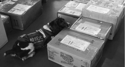 检疫犬正在工作