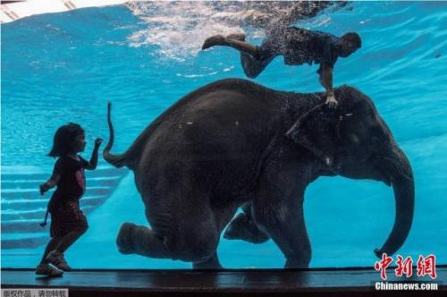 泰国大象玩潜水