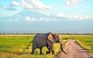 在非洲草原上看动物,是不少人的梦想。