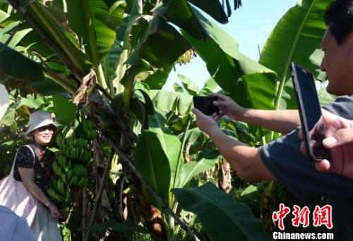 """图为海外华文媒体代表在林语堂文化园""""抱着""""香蕉合影。 张金川 摄"""