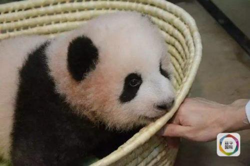 """图为上野动物园提供的""""香香""""照片。"""
