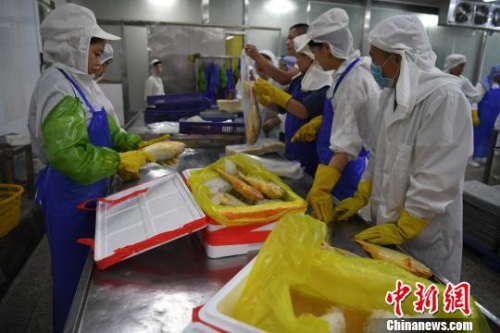 """""""夏威""""转向以深海鱼为资源提取的EPA、DHA制品、高档蛋白粉和鱼鳞胶原蛋白、鱼肝油等系列产品。图为生产车间。 张斌 摄"""
