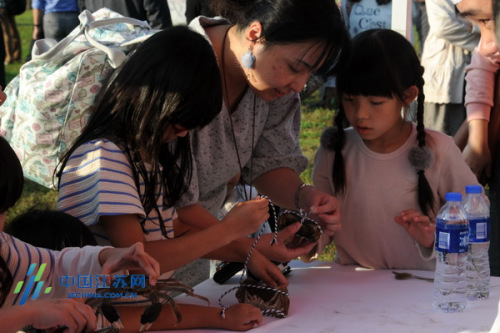 日本游客体验扎螃蟹