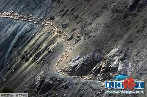 """""""相机摄""""《牧归》:新疆天山深处,牧民途经在陡峭的崖壁上。"""