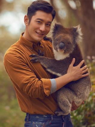 黄晓明在为南澳拍摄的旅游观光宣传片中,在Cleland Wildlife Park野生动物公园抱树熊。