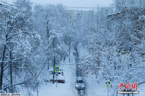莫斯科降雪量破纪录 大树坍塌航班被延误