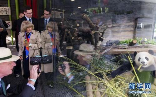 """2017年7月5日,在柏林动物园内的大熊猫馆,参观者在围观大熊猫""""梦梦""""。当日,来自四川成都大熊猫繁育研究基地的""""梦梦""""和""""娇庆""""在位于柏林动物园内的大熊猫馆正式亮相。新华社记者费茂华摄"""