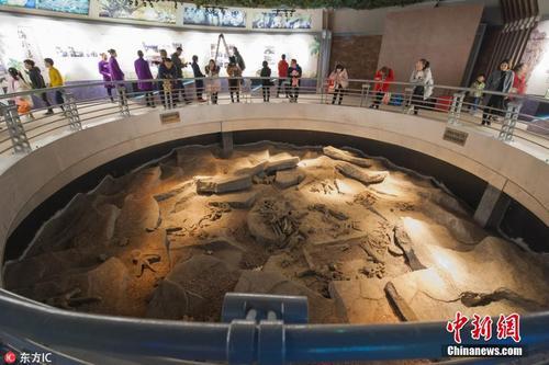 海外追缴国宝级恐龙化石展出 蛋中藏小恐龙胚胎