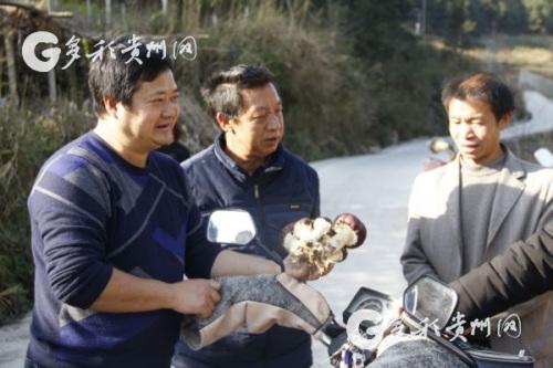 李裕荣现场帮助村民了解大球盖菇