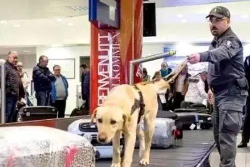 意大利机场海关使用专业警犬检查旅客物品。图片来自欧联网