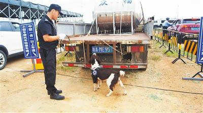 文昌市公安缉毒人员带着缉毒犬开展检查工作。