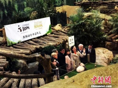 旅法熊猫宝宝将隆重庆生 同天生日者免票