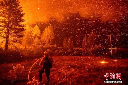 """美国加州大火吞没森林公园 大树枝头""""挂满""""火星"""