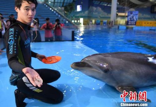 """9月19日,海豚正在享用""""私人订制""""月饼。 韩苏原 摄"""