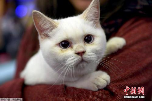 土耳其举行国际猫展 喵星小可爱亮相太撩人了