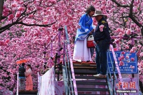3月19日,游客穿上古装在樱花树下拍照。<a target='_blank' href='http://www.chinanews.com/'>中新社</a>记者 任东 摄