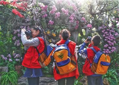 """昨日(14日),植物馆热带植物温室内,新京报小记者摄影组正在""""兰花墙""""前取景拍摄。新京报记者 尹亚飞 摄"""