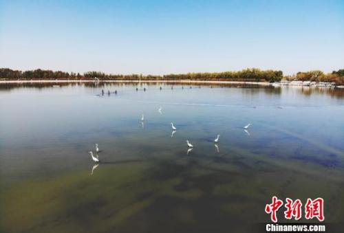 海外华文媒体高层代表参访甘肃张掖市高台县大湖2分快三官网湾。 杨艳敏 摄