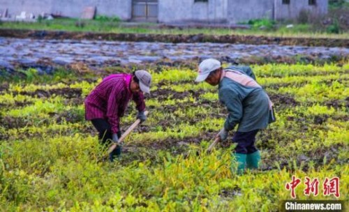 资料图:图为广西灵川县中南村村民开始翻地播种。杨宗盛 摄
