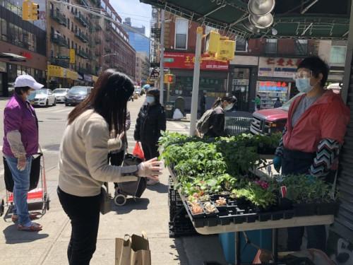 游女士(右)在华埠街头卖蔬果菜苗,虽然疫情期间行人较少,但生意仍相当火热。(记者颜嘉莹/摄影)