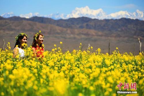 如天然油画!新疆乡村油菜花开花香四溢