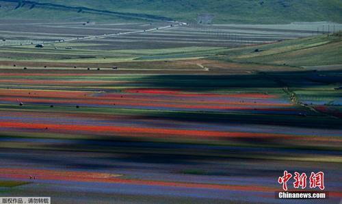 意大利乡村田间繁花盛开 色彩斑斓仿佛走入画作之中