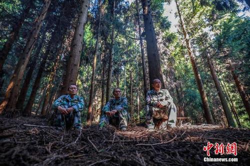 孪生三兄弟护林38年 走过数十万里山路磨坏上百双鞋