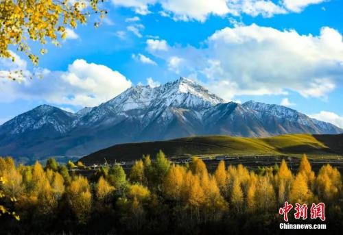 青海省海北藏族自治州蓝天白云、鸟雀悠闲。苏金元 摄