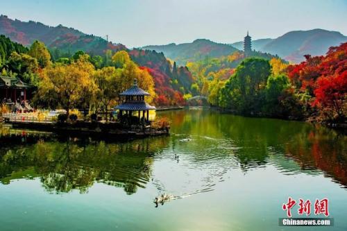 山东济南红叶谷秋意正浓。中新社记者 宋广兴 摄