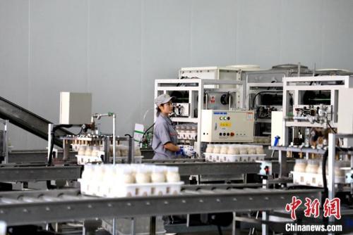 山东友泓生物科技有限公司几万平方米的现代化生产车间内,金针菇长在一个个瓶子里。李欣 摄