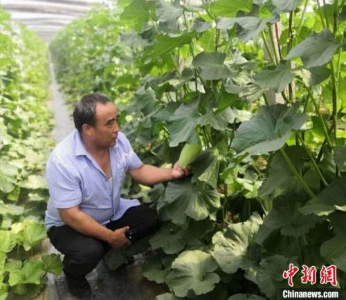 牛忠安来到合作社,查看蔬菜的种植情况。牛忠安供图