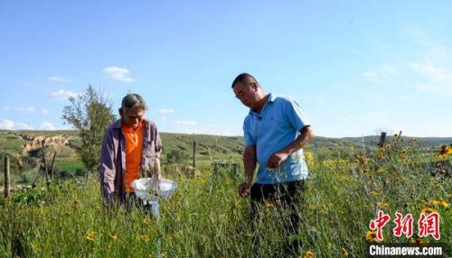 图为贫困户韩兰小(左)在采摘雪菊花。 王效平 摄