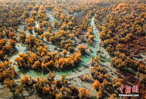 新疆塔里木河流域原始胡杨林层林尽染