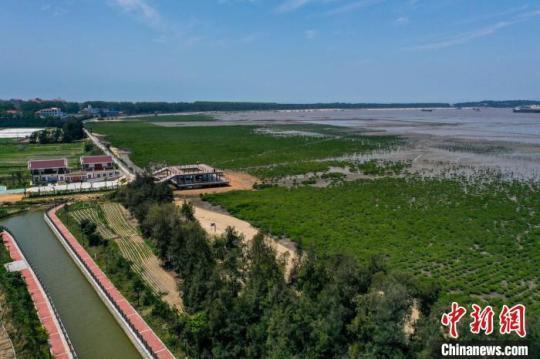 湄洲岛植被从38%增加到58%。 林春盛 摄