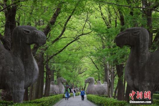 """2020年4月22日,游客走在南京紫金山明孝陵石象路上,这一年世界地球日的宣传主题为""""珍爱地球 人与自然和谐共生""""。 <a target='_blank' href="""