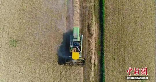 航拍镜头下的新疆麦田,大型机械忙碌着。齐旭云 摄