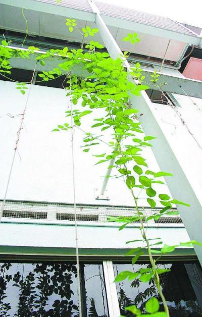屋前的棚架使用镀过锌的铝金属线