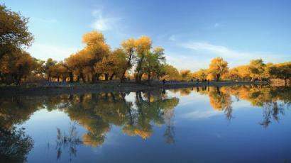 湖泊和胡杨林构成秋天最美的风景