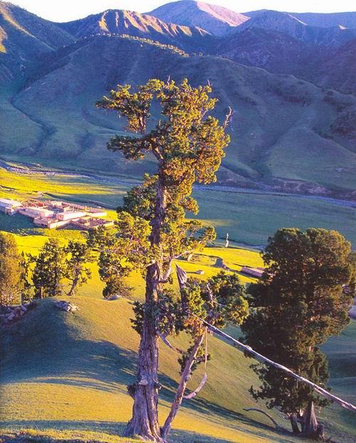 青藏高原 吐谷浑