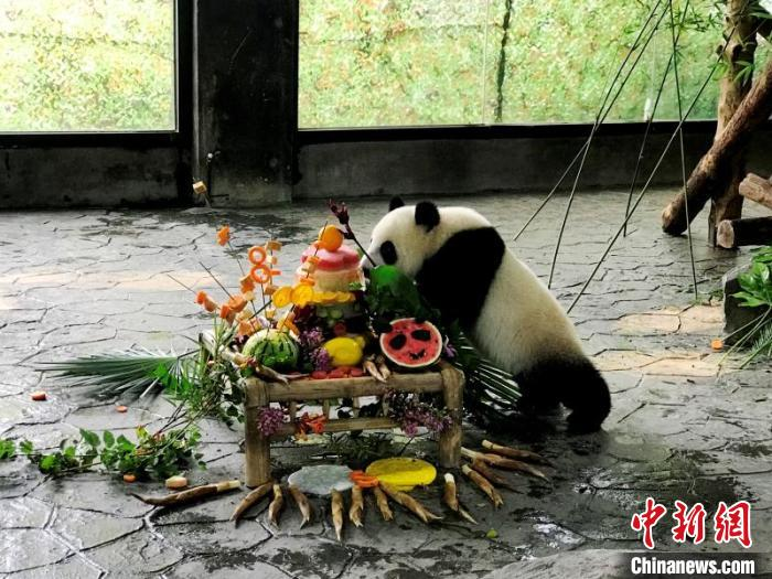 """海归大熊猫之女""""嘉嘉""""庆8周岁生日"""