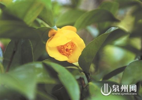 结合种植中国,闽南的植物,适当配置一些世界著名行道树,世界庭院树