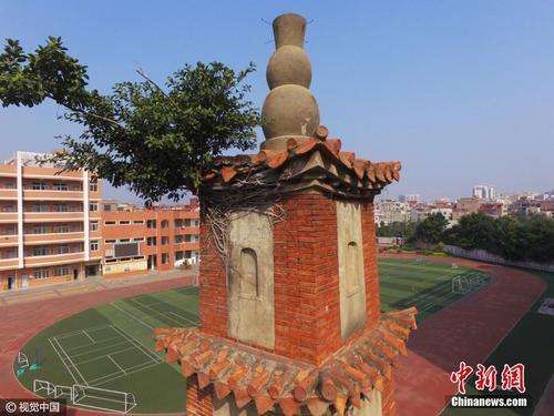 福建388年古塔长树 文保中心称将铲除榕树(图)