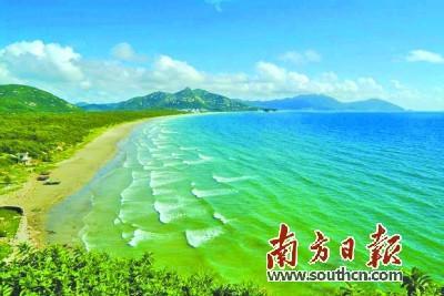 中国侨网台山市川岛镇将改造红树林和沙滩防护林.资料图片