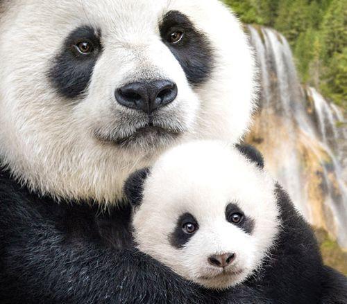 中国侨网电影《我们诞生在中国》剧照