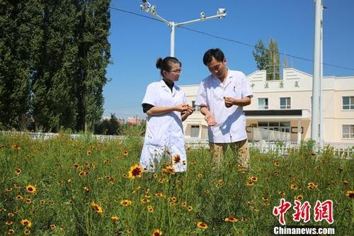 中国侨网图为图尔逊·娜依尔在和援疆医生交流中医知识。李豪摄