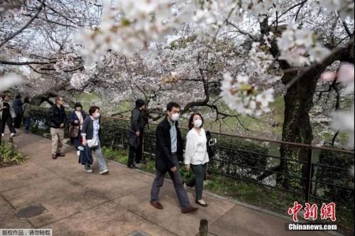 资料图:日本东京上野公园游人戴口罩赏樱花。